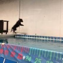 dogdockdiving2