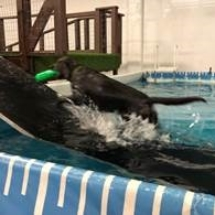 dogdockdiving3